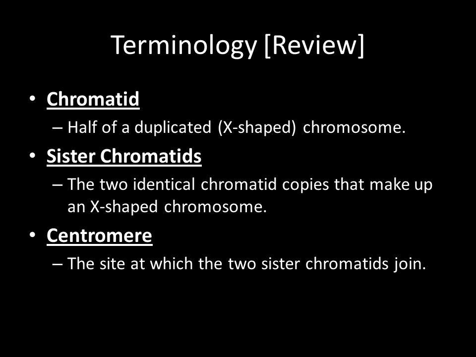Terminology [Review] Chromatid Sister Chromatids Centromere